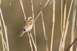 久しぶりの朝の鳥見