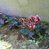冬の花→春の花→夏の花