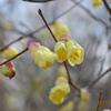 野を駆け巡る「春風」のように🎵