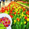 山下公園から横浜公園に行ってみたら「全国都市緑化よこはまフェア」が開催されていた