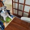 ❝床全面にカーペット❞  愛犬と暮らす家の工夫①