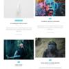 WordPress Ignisでカテゴリー色のカスタマイズ
