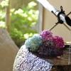 紫陽花、三景園にて