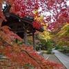 京都旅行記①嵐山(天龍寺、常寂光寺、二尊院)