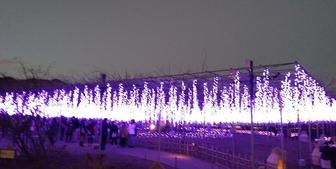【あしかがフラワーパーク】日本一のイルミネーション体験記・感想