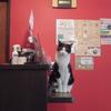 「いらっしゃいませ!」可愛いネコちゃん達がお出迎え!札幌市東区のネコカフェ「ミューキーズ」に行ってきた!!
