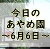 【あやめまつり】今日のあやめ園~6月6日~