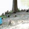 【写真】最近の写真撮影(2017/8/6)昆陽池公園その2