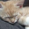 子猫の寝顔が変顔過ぎて癒されるw