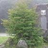#510 静岡の有名スカイライン [県東部]