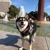 大阪動物愛護フェスティバル2019 in 大阪城公園に行ってきたゾ!