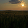 夕日のハスラー
