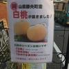 岡山県勝央町特産の白桃が好評です!