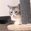 猫カフェは癒しの空間🐾🐈猫カフェMyaoでおやつパワーでモテモテ