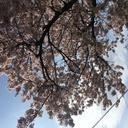 意識高くなりたい系大学生ミロのブログ