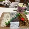 セブンイレブンの新発売!「豚焼肉弁当(唐辛子マヨネーズ)」