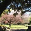 清澄庭園 in 清明
