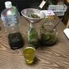 緑茶酒完成