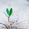 手っ取り早く成長する方法!圧倒的に早く成長できます!