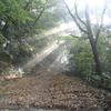 林道の木漏れ日
