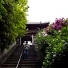 紀州街道をゆく(1) 古寺巡礼 あじさい寺で有名「長慶寺」を往く【お墓まいり】