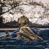 野馬のいる山の麓に打ち捨てられたエデン-Eden of statue-