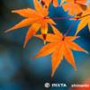 秋の七五三シーズン到来! 繁忙期に向けてfotowa事業部がしていること