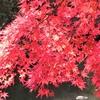 森林植物園②観光37...20191110神戸
