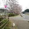 桜見とパンケーキ(^o^)