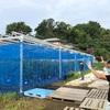 視察 水耕栽培2