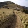【2021一人登山⑧】達磨山を登ってきた ー山も歩きたい、海も見たいってわがままなあなたにおすすめですー
