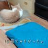雨田甘夏、使い方です。【猫とベッドと使い方事情】