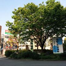 ★池田駅前の木
