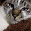 猫にも目標や夢はあるのだろうか?