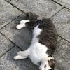 【茨城 土浦大師不動尊 大聖寺(だいしょうじ)】猫に萌えつつ御朱印巡り