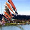 北上川をまたぐ鯉のぼり