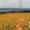 大空町 朝日ヶ丘公園展望台の秋のひまわり畑