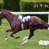 「府中牝馬S」2019年☆予想!!回収率100%を維持できるでしょうか!?