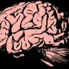 更新、シフト、阻害。知性と相関するのはどれ?