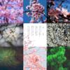 アメブロ、Instagram、Facebookに作家「葉山 葵」さんの詩をご紹介しました。
