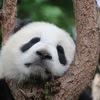 オンライン中国語レッスン体験談&併せて使用したおすすめ市販教材