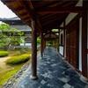 京都・嵐山 - 鹿王院の庭園でひっそりと散る夏椿