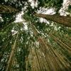 今日は疲れたんでソローの「森の生活」を読んで癒されることにする…
