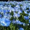 [[今週のお題]]:100万円で青い花畑のイラストを?