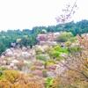 一度は行きたい 吉野の桜 ~山が一面ピンクに染まります~