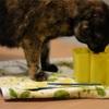 猫の水飲み場