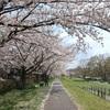 地図子、多摩川を歩く -7 羽村橋から拝島橋まで-