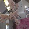 2020/3/10 テーマ水槽「水中の薄墨桜」