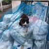 外猫たち(新たな発見)