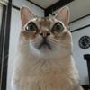 ビニール依存症の猫